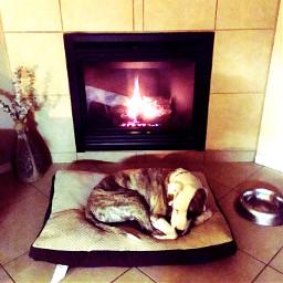 dog fireplace relaxing