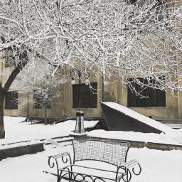 snow white armenia park tree freetoedit