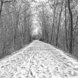 italy nature snow blackandwhite