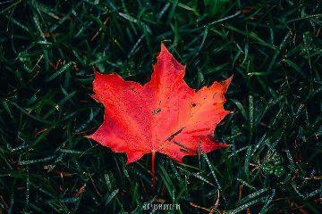 freetoedit canada leaf red green