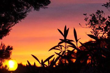sunset ligth evening freetoedit