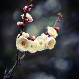 bokeh colorful freetoedit flower love