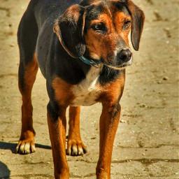 dog dogs doglover dogsofpicsart doglove