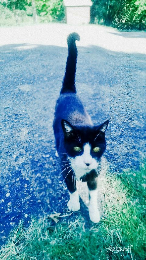 animal cat lifestyle personality