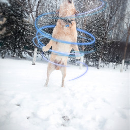 dog freetoedit snow interesting spiralangel