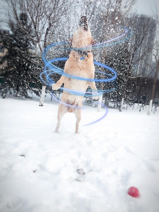#dog #FreeToEdit #snow #interesting #spiralangel#dogsofpicsart