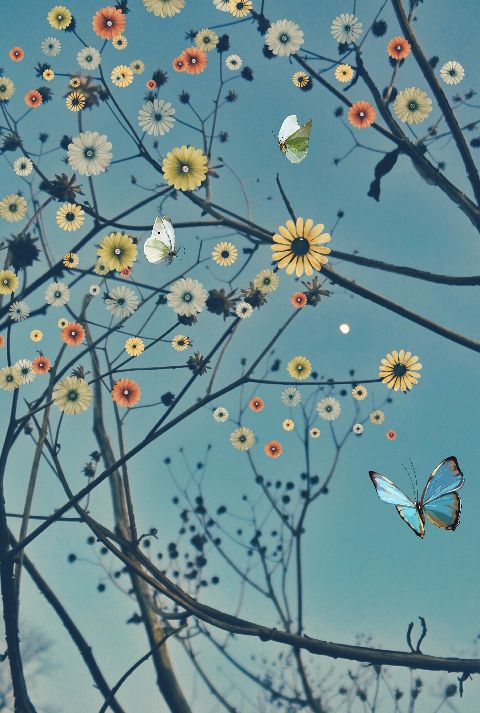 flowers branches butterfly moon twilight freetoedit