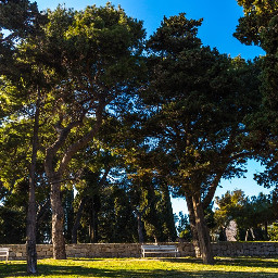 park trees nature