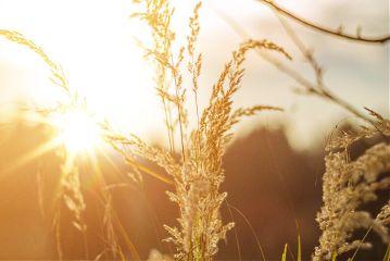 freetoedit summer field sun sunset