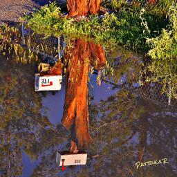 raininthedesert rainpuddle mailboxes skyreflection water freetoedit