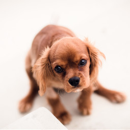freetoedit puppy dog cute animal