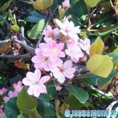 freetoedit flowers spring beautiful nature