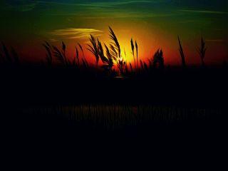 myremix myedit freetoedit marsh marshland
