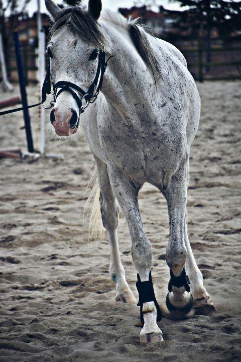 petsandanimals horse riding training cute freetoedit