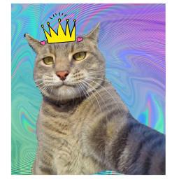 freetoedit cat boss