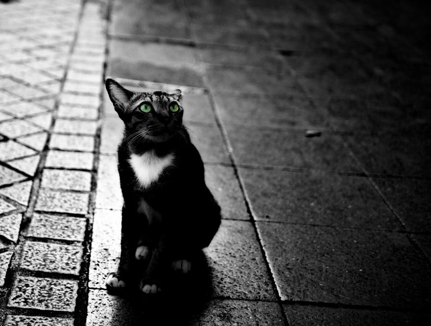 #FreeToEdit #digital #digitalphotography #lumix #lumixg3 #g3 #panasoniclumixg3 #edited #bangkok #thailand #Street #streetphotography #animal #cat #blackandwhite #colorsplash #mft #microfourthirds #m4/3 #m43 #micro4/3