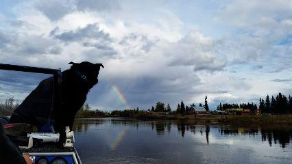 rainbow dog rain boat dpcrainbow