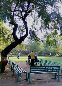 nature morning parimal ahmedabad india freetoedit