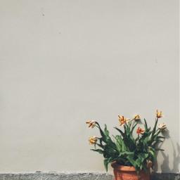 flowers lessismore wall freetoedit